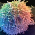 Tレグ細胞がアレルギーやアトピーに効く?増やす方法や食べ物も!